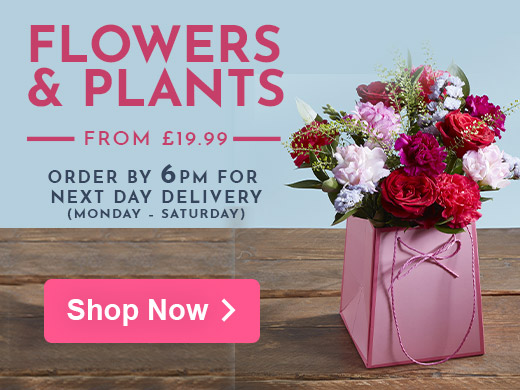 Free Next Day Delivery on Flowers