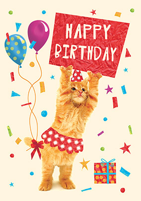 Cat birthday cards funny cute funky pigeon happy birthday kitten card bookmarktalkfo Images