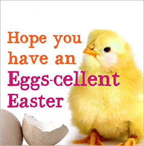 Eggs-cellent Easter Chick Easter Card