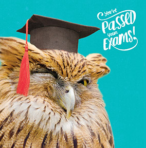 Wise Owl Exam Congratulations Card