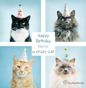 More Like This Cats In Party Hats