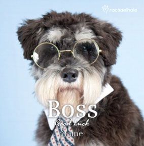 Dog Boss Good Luck personalised card