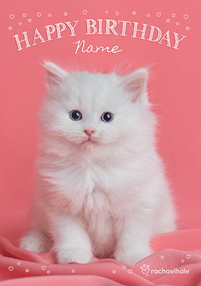White Kitten Birthday Card NO Preview Image Is Not Found