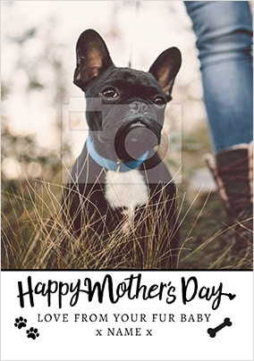 From your Dog on Mother's Day photo upload Card