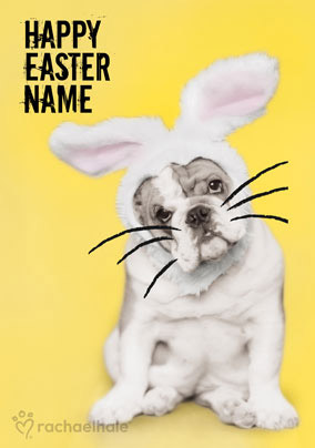 Bulldog in Bunny outfit personalised Easter card