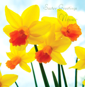 Framed - Easter Daffodils