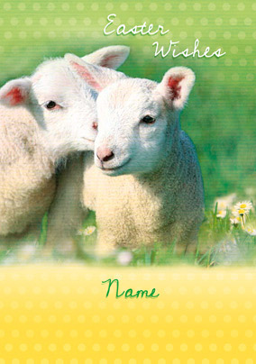 Forget Me Not - Easter Lambs