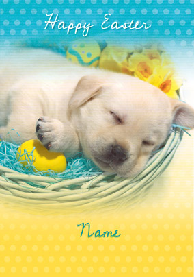 Forget Me Not - Easter Sleeping Puppy