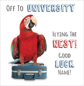 Abacus - Flying the nest for University
