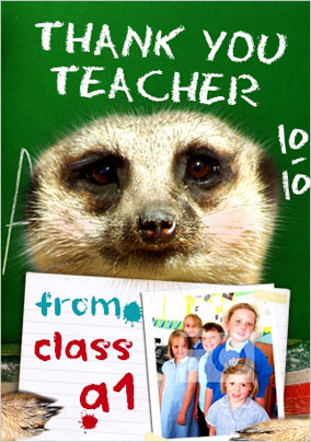 Meerkat - Thank You Teacher PU