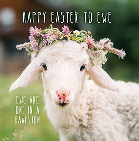 Happy Easter to Ewe Card