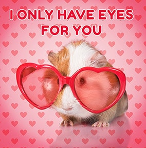 Eyes For You Guinea Pig Valentine's Day Card