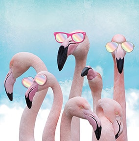 Flamingo Sunglasses Birthday Card