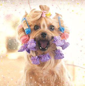 Dog And Curlers Card
