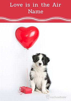 Border Collie Valentine's Day Card - Rachael Hale